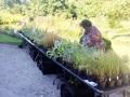 Växtmarknad den 19 september