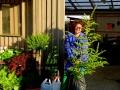 Victoria på Ystads plantskola