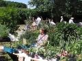 Vår årliga växtmarknad vid Svaneholm den 6 juni.