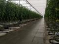 Tomatodl. Trbrg 3