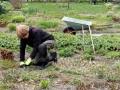 Vårupptakt  i Svaneholm: Karin-rensar-en-rabatt
