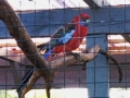 exotisk-fågel-i-Skivarpsträdgården